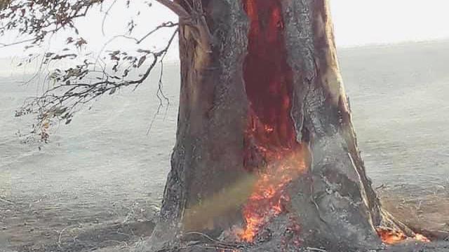 Así se incendiaba uno de los ejemplares. Foto de Martin Cacciarelli.