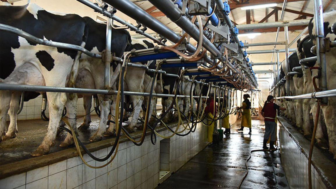 La producción de lácteos del país se destina principalmente al consumo interno.