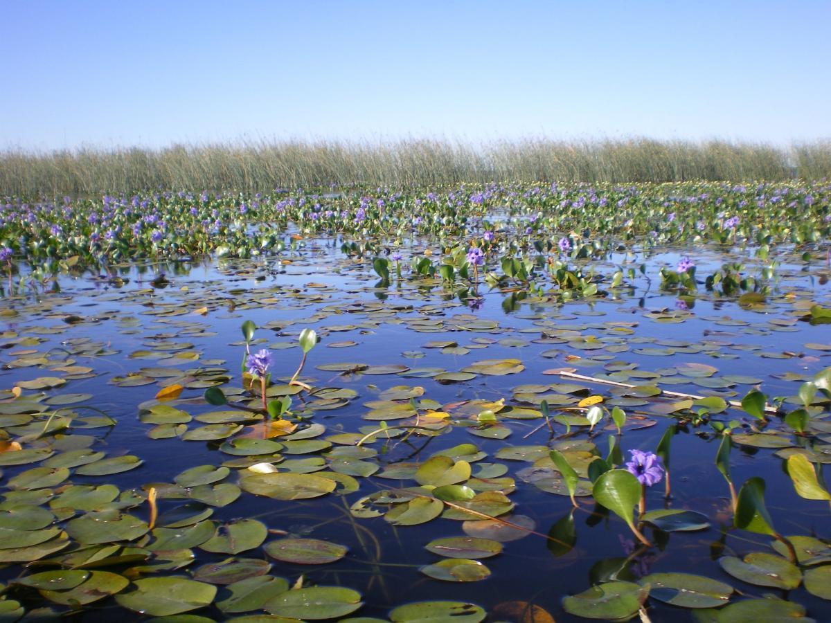 El humedal fue reconocido por la Corte como ecosistema vulnerable que necesita protecció