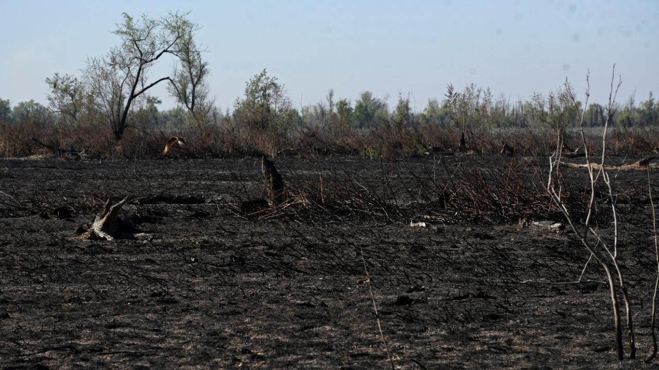 Las islas después de los incendios.