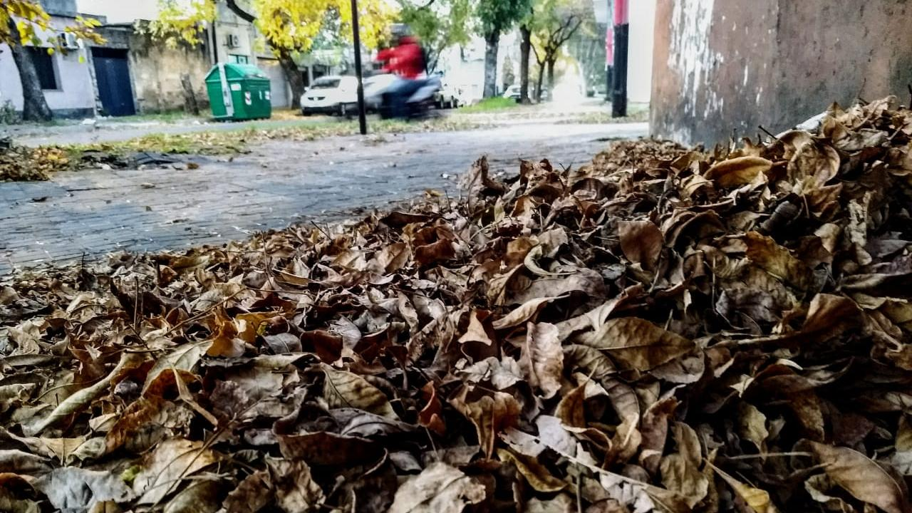 El viento volará todas las hojas