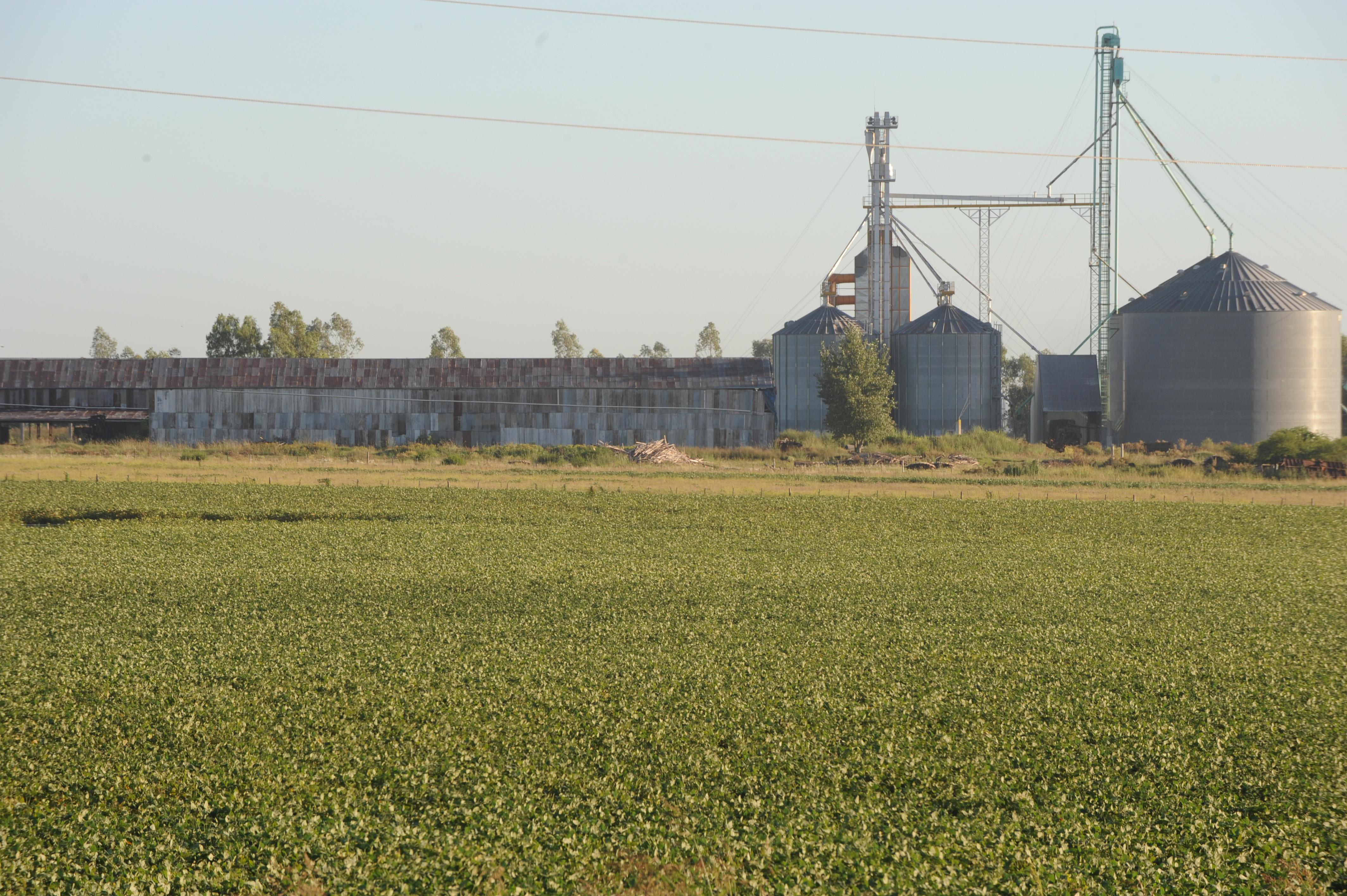 Los productores quedaron enganchados por la cerealera
