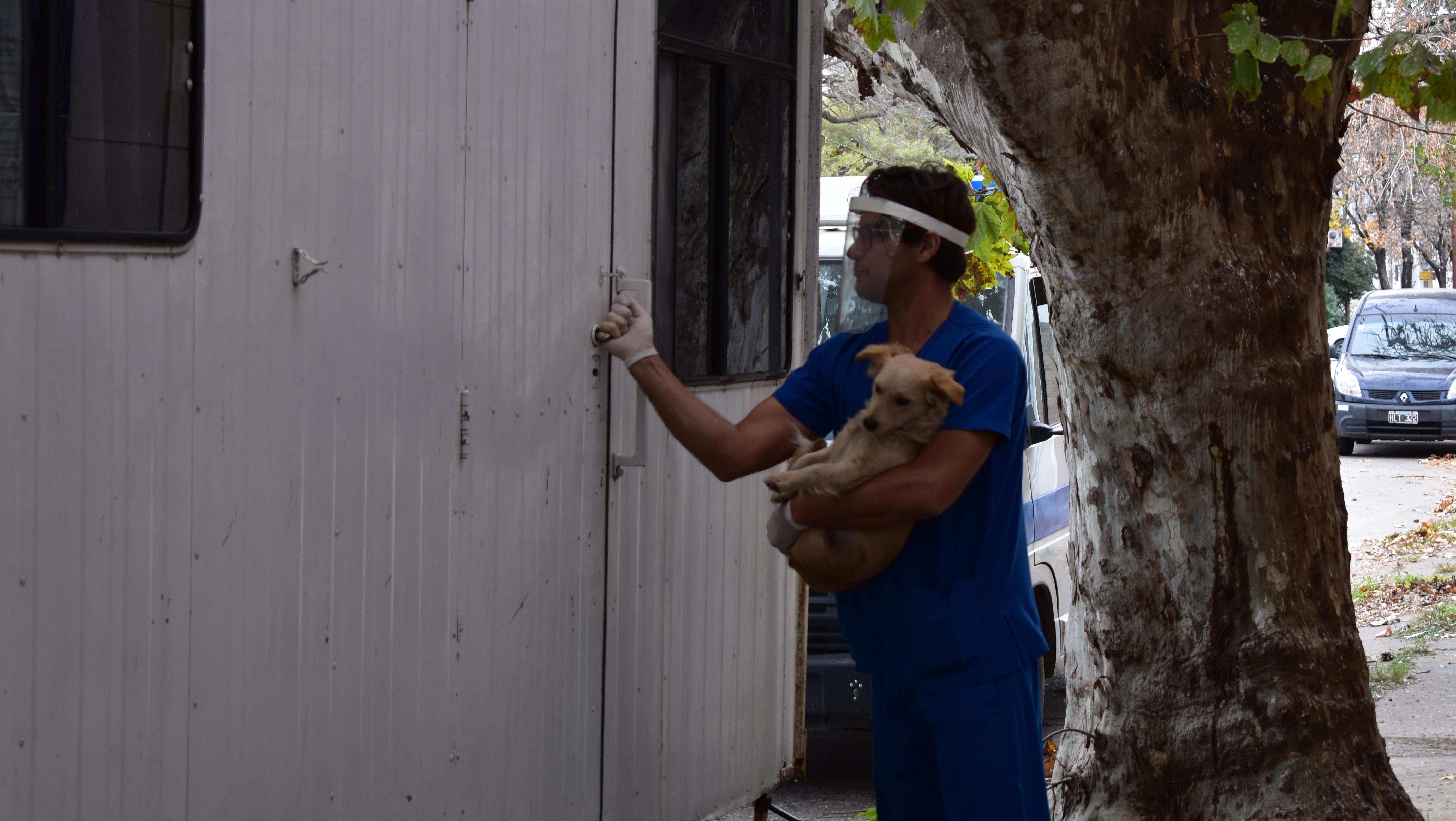 El Dr. Almeida junto a un can previo a ser castrado.