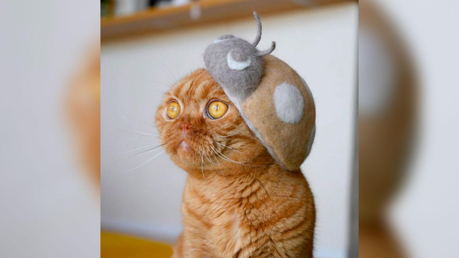 Un fotógrafo crea sombreros hechos con los pelos de sus gatos