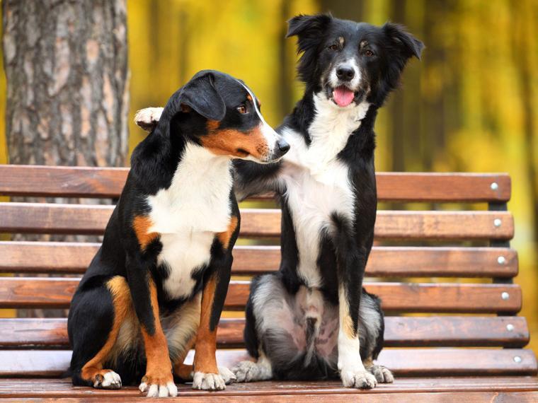 La amistad no es cosa de humanos, solamente.