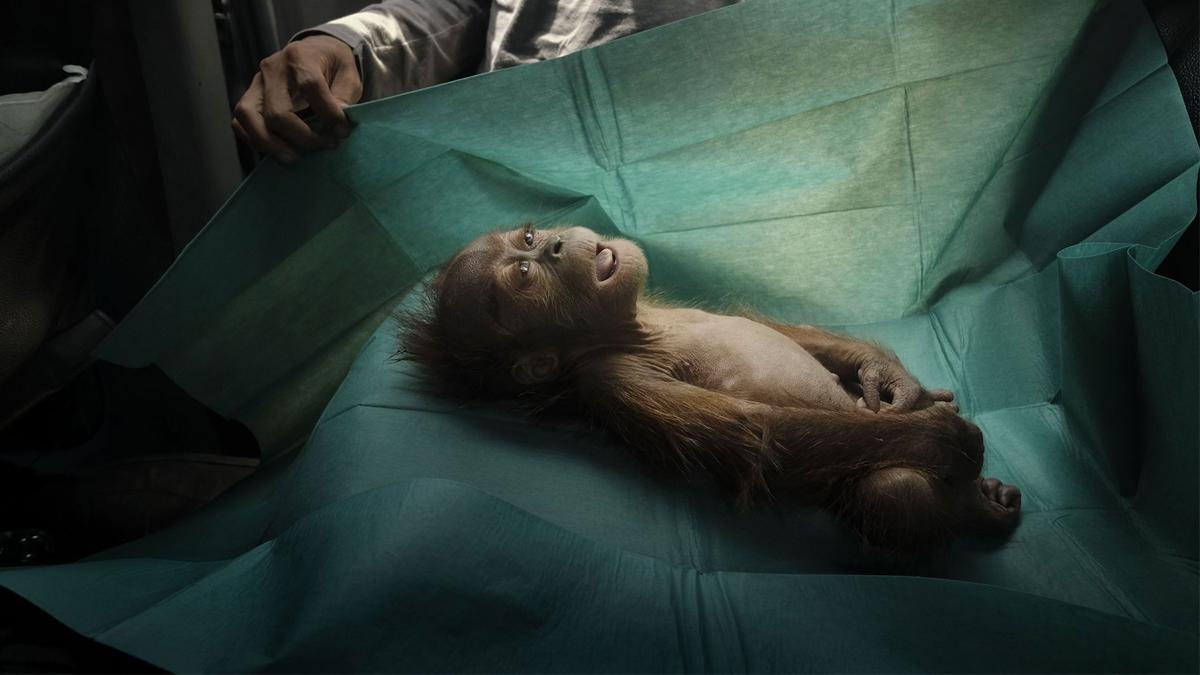 Estas son las fotografías ganadoras del World Press Photo 2020