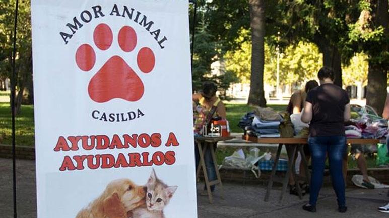 Permanentemente, Amor Animal genera actividades para cuidar a los canes.