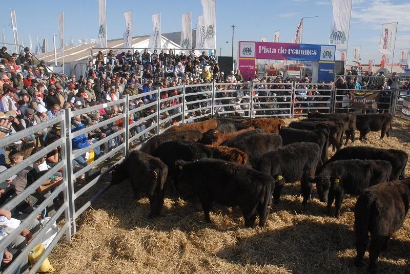 Ferias ganaderas, otra diversificación en la cartera de negocios de AFA.