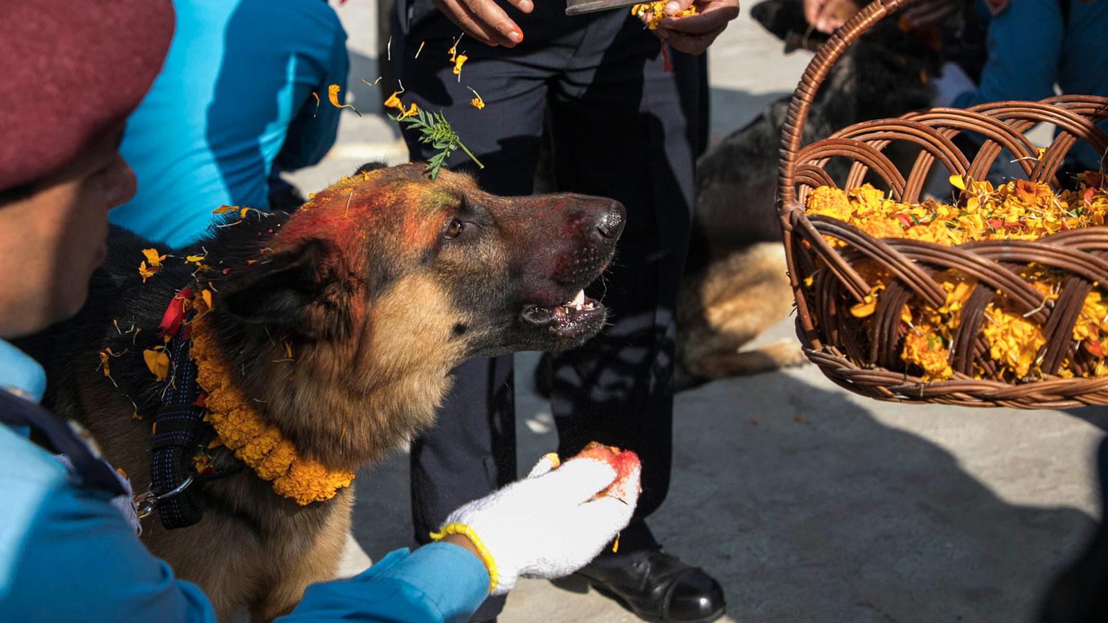 Kukur Tihar, el festival que celebra a los perros