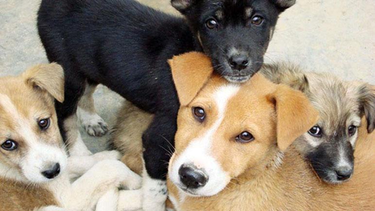 Casilda tendrá un registro propio de su población canina.