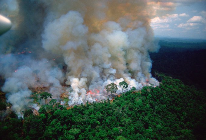 Los incendios están devorando gran parte de la selva brasilera