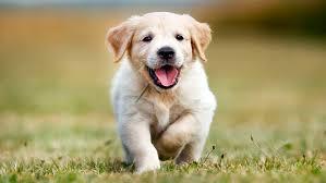 Un perrito que es uno más del gallinero.