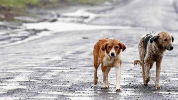 La crisis afecta también a los animales (Foto de EFE)