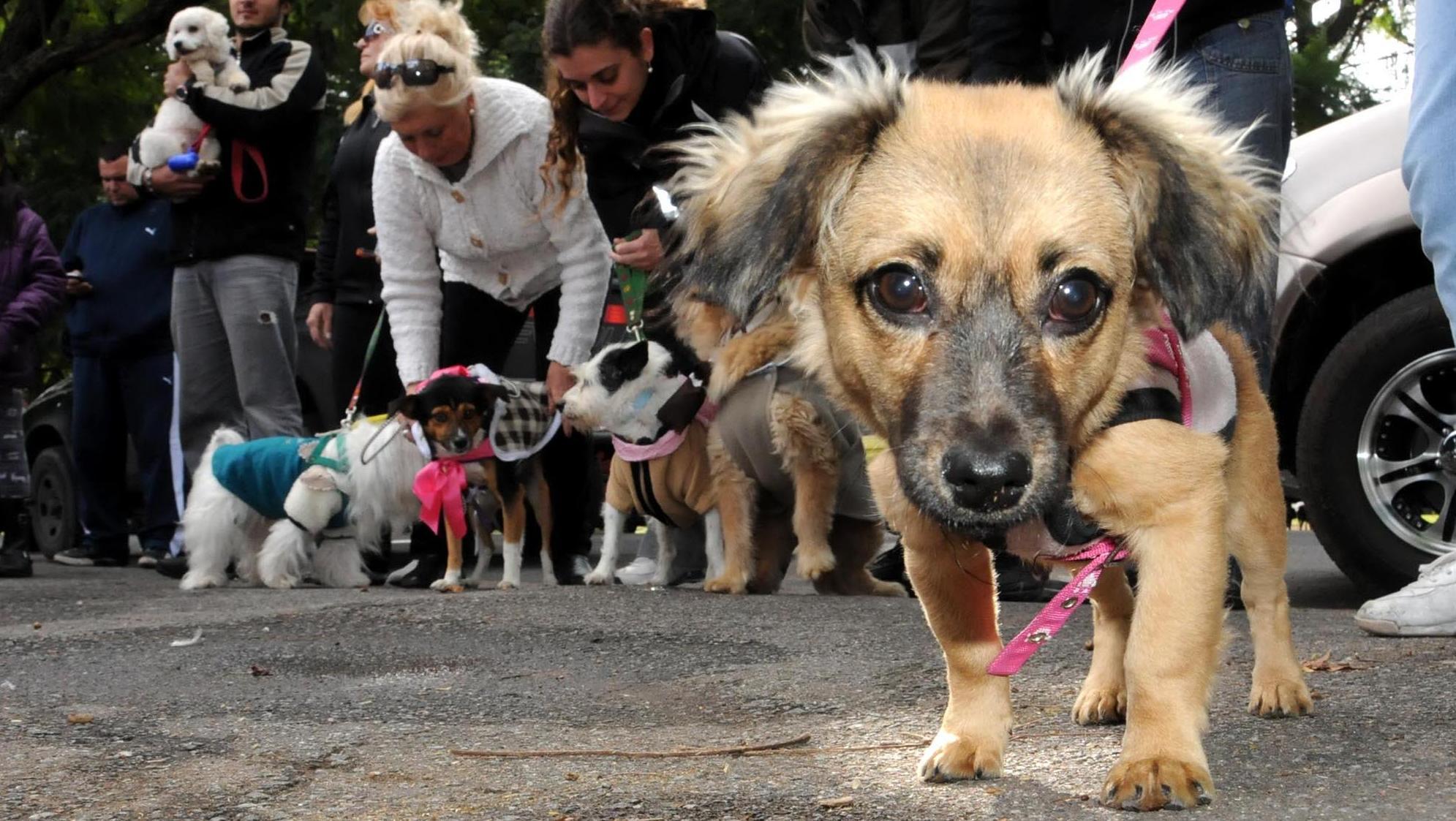 Perros con domicilio y perros callejeros, estos son los números.