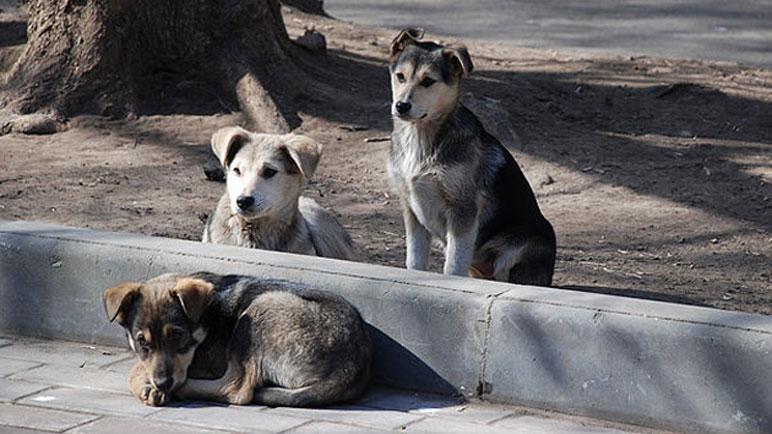 Los perros en la calle. Una imagen habitual en Casilda.