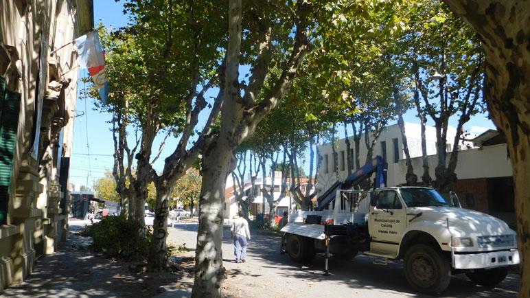 El Municipio hizo poda de árboles y avanzó en la limpieza de veredas.