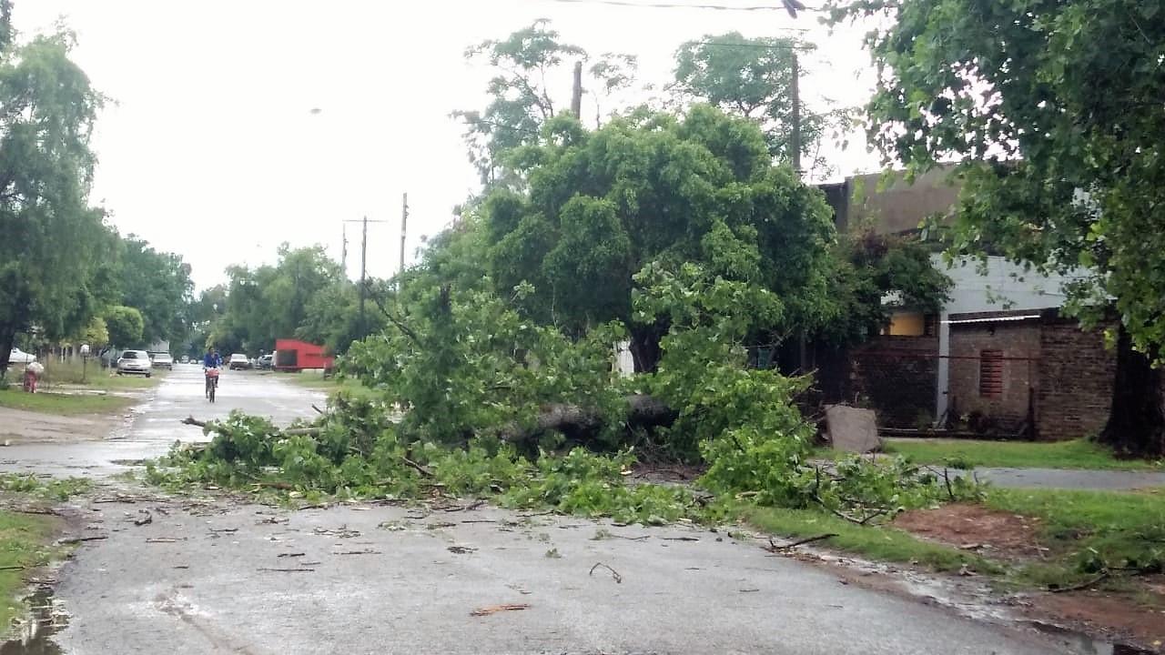 Calles anegadas, cortes de luz y árboles caídos. Lo que dejó el temporal de madrugada.