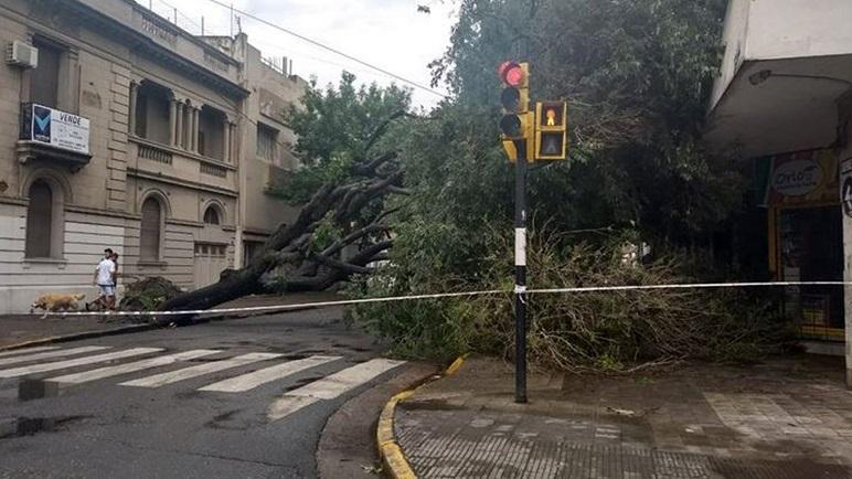 Un árbol cayó el domingo en Dorrego y Pellegrini. Ya fue removido.