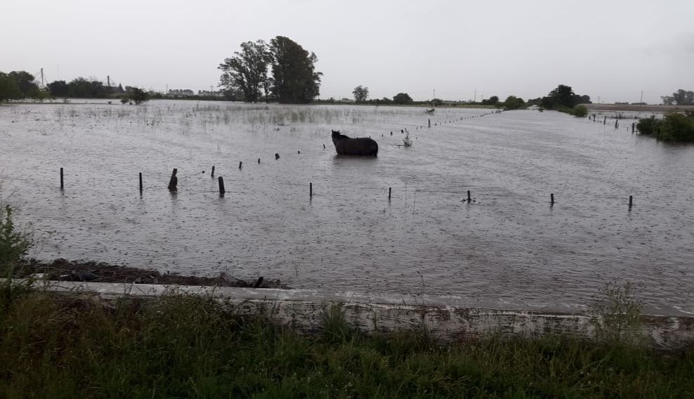 El temporal afecta a la región: campos anegados en Barrancas.