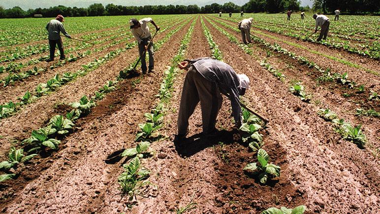 Hasta el 30 de noviembre se pueden registrar a los trabajadores del agro.