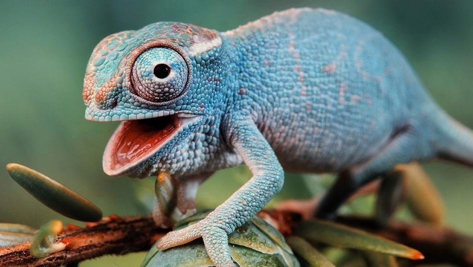 El reptil inspira a los investigadores para crear novedades para el celu.