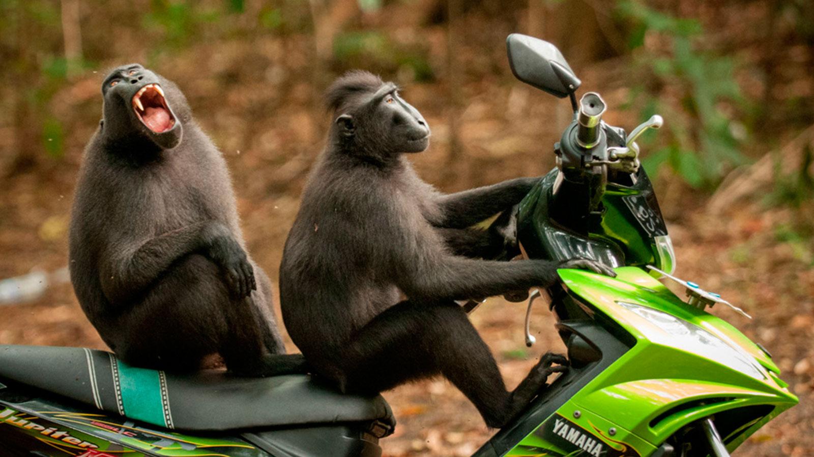 Las fotografías más graciosas del mundo salvaje