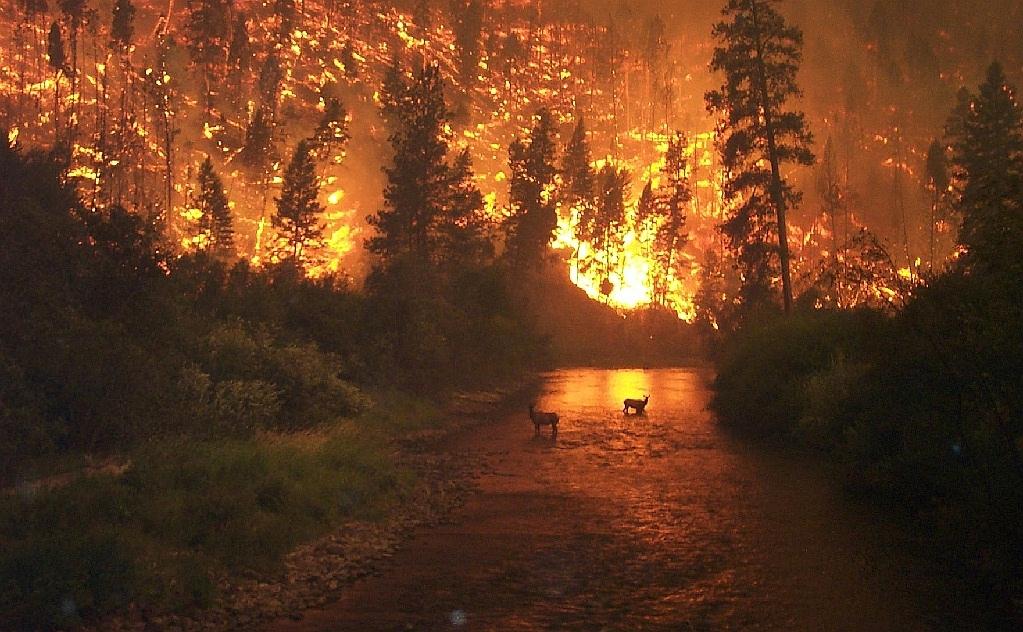 Software para ayudar durante los incendios forestales