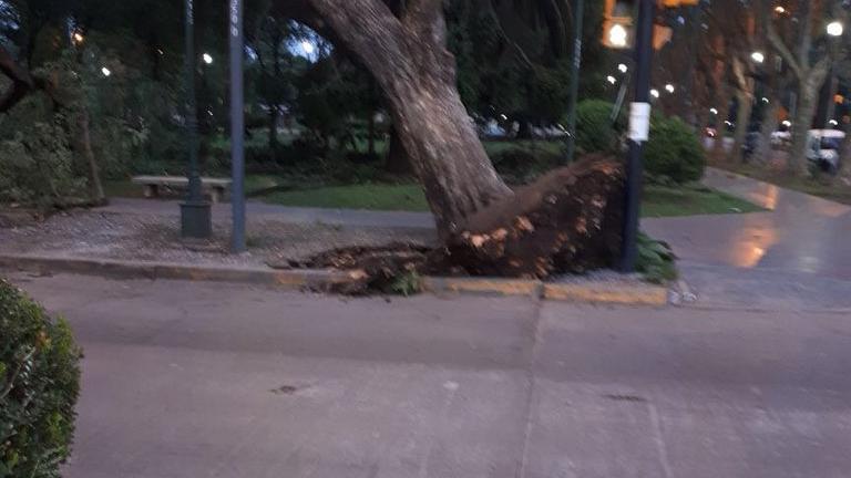 Un árbol cayó sobre un auto en zona norte (Foto: @apurainfo)