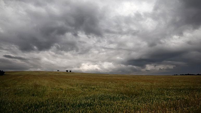 Lluvia para los campos. El agua es necesaria en la región.