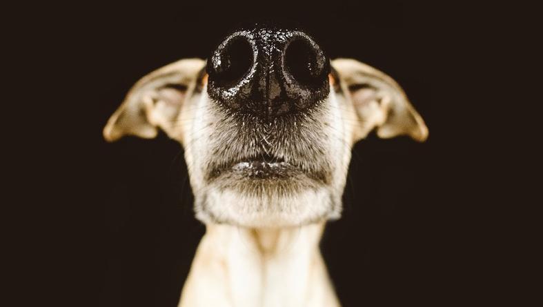 Como un rastreador canino, este invento detecta el gas rapidísimo