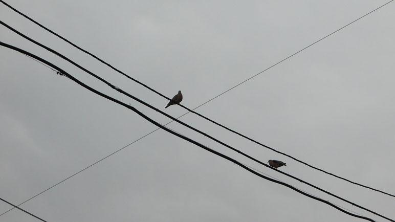 Las aves empiezan a buscar refugio a la vista del cielo gris de este jueves.