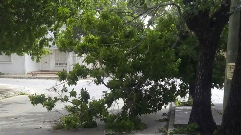 El viento fue el fenómeno que ocasionó mayores problemas en la ciudad.