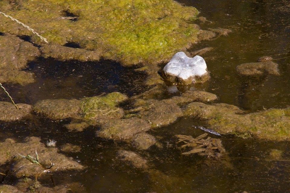 Alrededor del 70% de los residuos hallados son plásticos.(Foto:GiselaArdit)