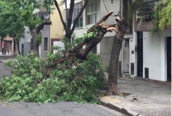 Árbol caído en Cochabamba al 300 (@rcalito)