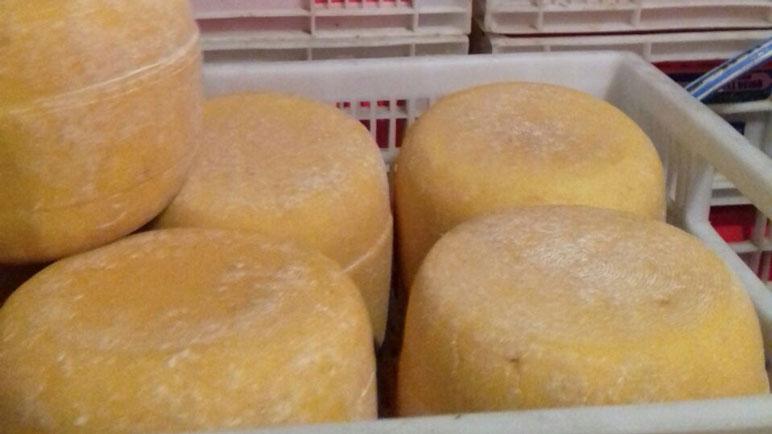 Incautaron quesos en Casilda. Habían sido robados en Córdoba.