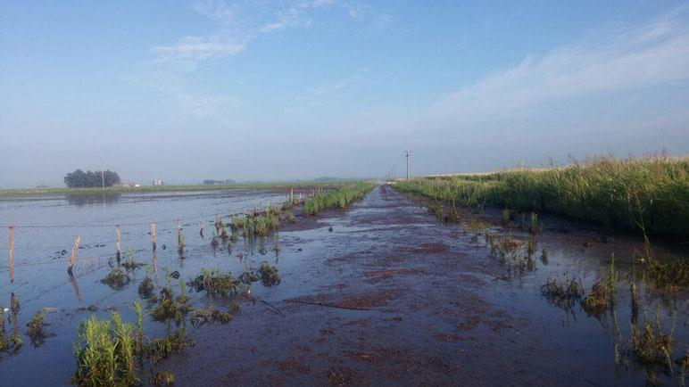 El panorama en campos de la región.