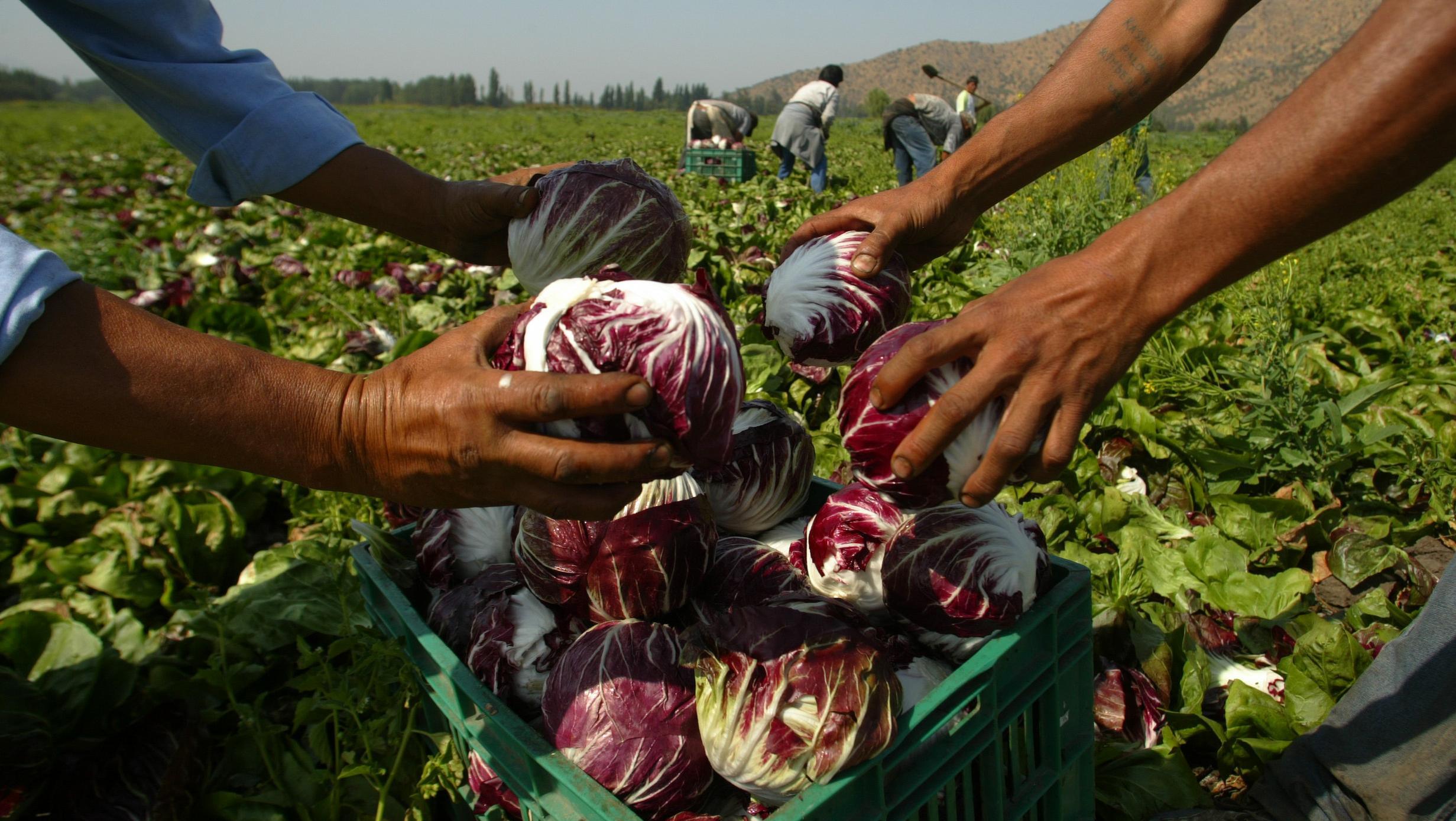 Los precios de la canasta frutihortícola se multiplicaron por 6 veces promedio en octubre.
