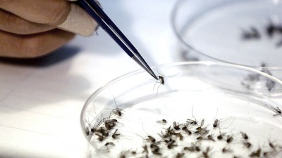 La mayor cantidad de personas contrae el virus tipo 1