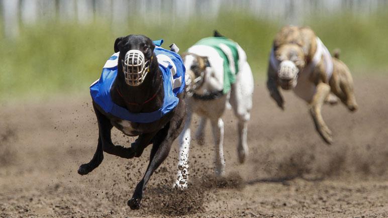 Piden que las carreras se prohíban en todo el país.