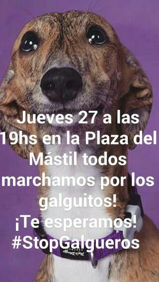 #StopGalgueros.