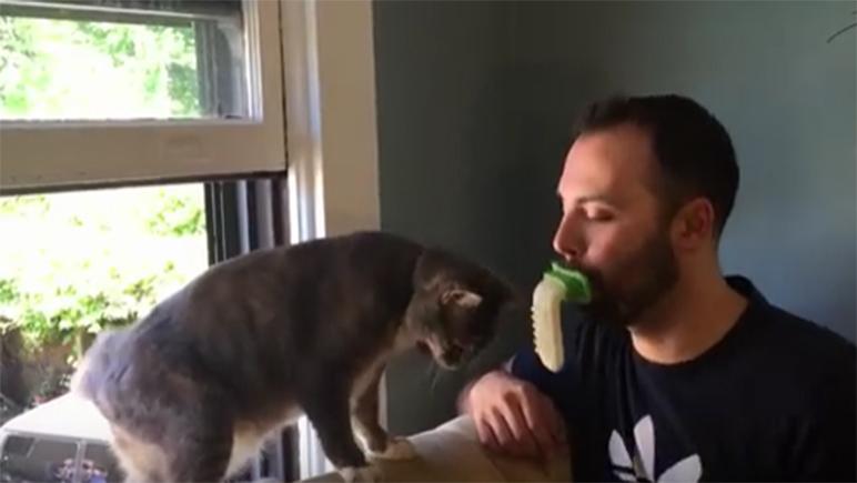Una lengua de goma para que el humano le devuelva el lametazo al gato.