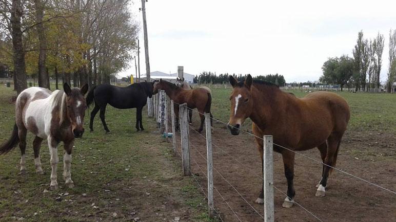 El Centro cuenta con 8 caballos.
