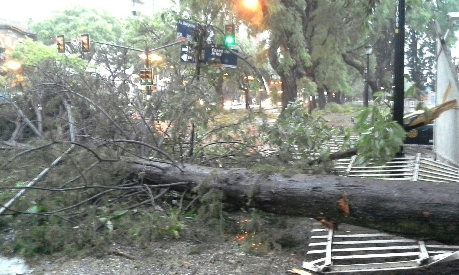 La caída de los árboles produjo daños en la vía pública (Foto: Angel Donzelli)
