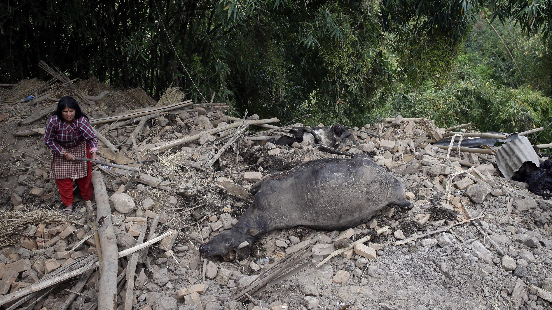 Animales fueron alcanzados por el terremoto