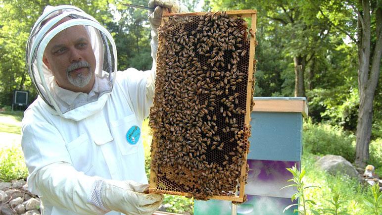 La apicultura quiere volver a ganar espacio.