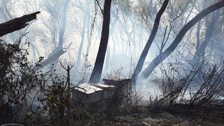 Miles de colmenas se perdieron en el Delta del Paraná.