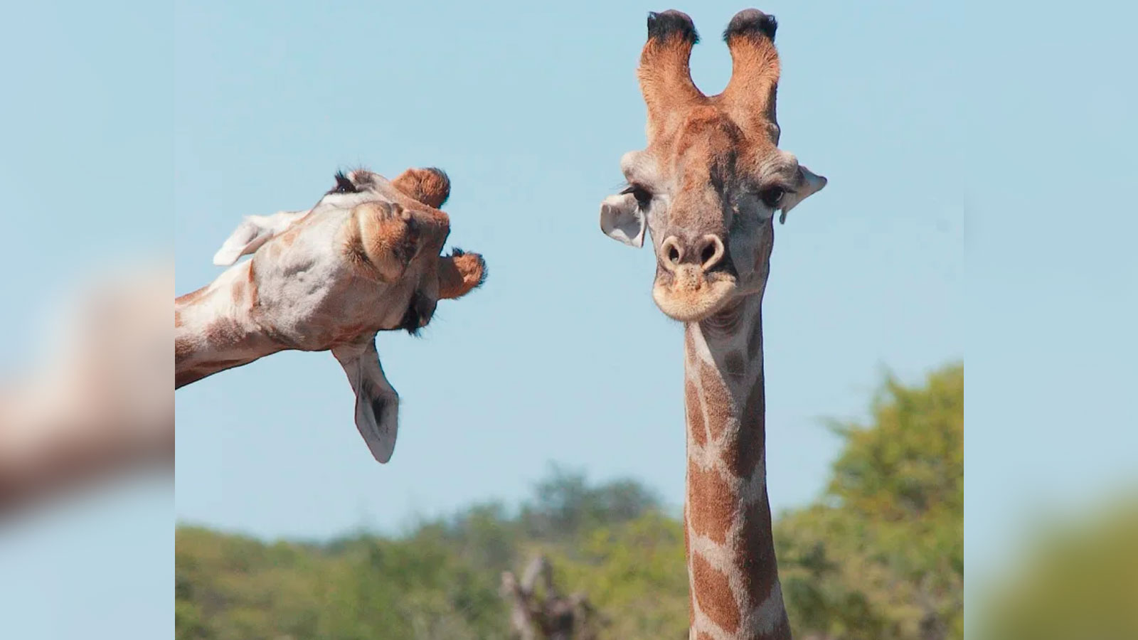 "Los ganadores del ""Comedy Wildlife Photography Awards 2020"": animales siendo graciosos"