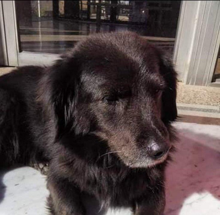 Pilu, el perro famoso del cementerio local.